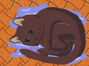кот на мокром полу
