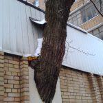 Москва. Дерево в стене